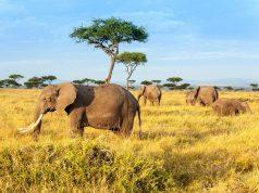 Kenya - Landet der bør være på din bucket liste