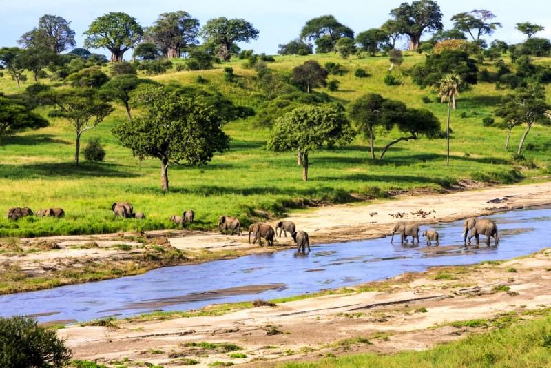 Tre store oplevelser med dyr i Tanzania