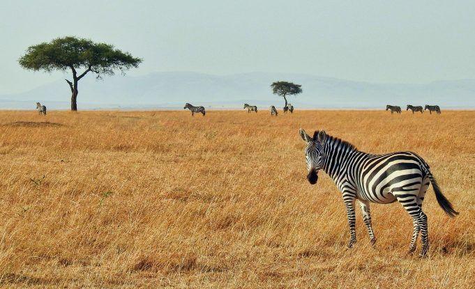Kruger National Park – Skab minder for livet